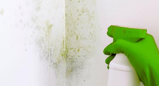 Moisissure noire sur vos murs de quoi s'agit-il et comment l'expliquer